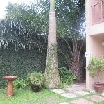 Ivy covered wall, birdbath, palms and rooms facing the pool.