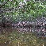 Mangroves!