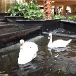 Enjoy the beautiful swans in the indoor courtyard!