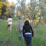 Walk among the olive trees with Mauro and Laura