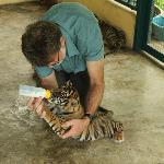 3 month old cub at Tiger Kingdom