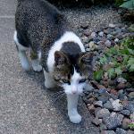 Debbie, the owners' tomcat (yep, Debbie's a male).
