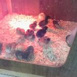 New additons to the Hatchery