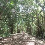 mangrove walkway in the park