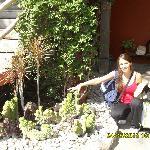Bellos ejemplares de crasas y cactus