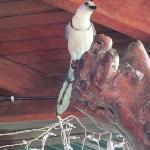 Bird in the breakfast area...