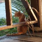 Watching the wildlife