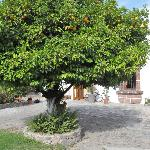 Beautiful orange tree in the front yard