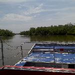 Florida mangrove landscape
