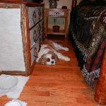Charlie sleeping in cabin 3!