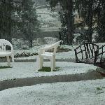 """Snow covered """"garden"""""""