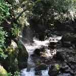 万葉公園の渓流