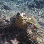 Beauté des Seychelles en PMT
