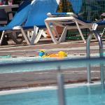 bilde fra bassenget