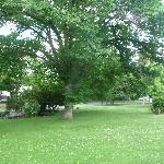 yard with big trees