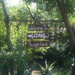 Lizard bungalows