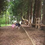 The low ropes course