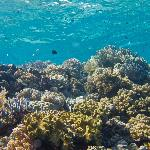 A typical reef scene.