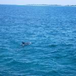 Jojo the dolphin!!
