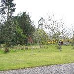Blick in den Gartenbereich