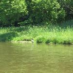 Grand River 6