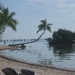 Beautiful palm tree on beach