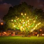 Mark Handforth, Electric Tree. Collection of MOCA North Miami. Installation at Griffing Park, No