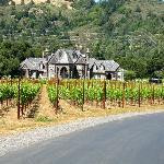 The Ledson Winery/Vineyard