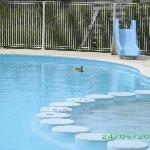 Piscine réservée aux canards avec déjections de ces braves bêtes