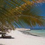Photo of Mangrove Bay