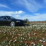 We offer Private Tours to view teh flowers in Namaqualand