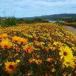 Flower season in Namaqualand