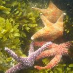 A group of sea stars