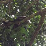 Tree wildlife in San Pedrillo - Corcovado National Park