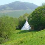 In the tipi camping field
