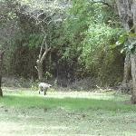 .Gray langur @ outside our room
