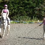 Cerys and Star being put through their paces.