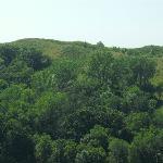 Oak forests - Sylvan-Runkel Preserve