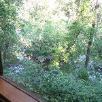 view out cabin #1's large window toward the creek below.