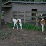 Cute foals across the street (June 2012)