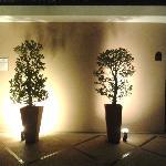 trees embre