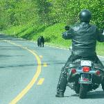 You never know what is around the corner on Skyline Drive