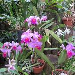 Orchidenhaus