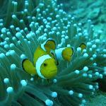 arrecife y memo
