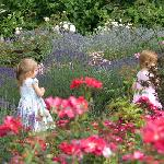 Lose yourself in the beautiful rose garden