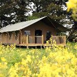 Wild Luxury Lodge