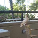 Bird waiting on his breakfast!