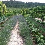 Wineries in Aix-en-Provence