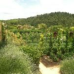 Wineries in Aix-en-Provence
