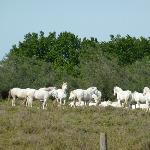 Photo de Parc Régional de la Camargue